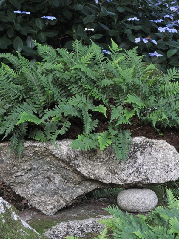 A fern growing from a stone cairn.