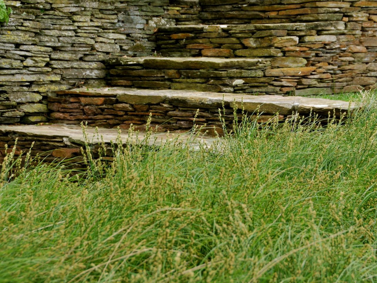 Ayrmer Steps Carex