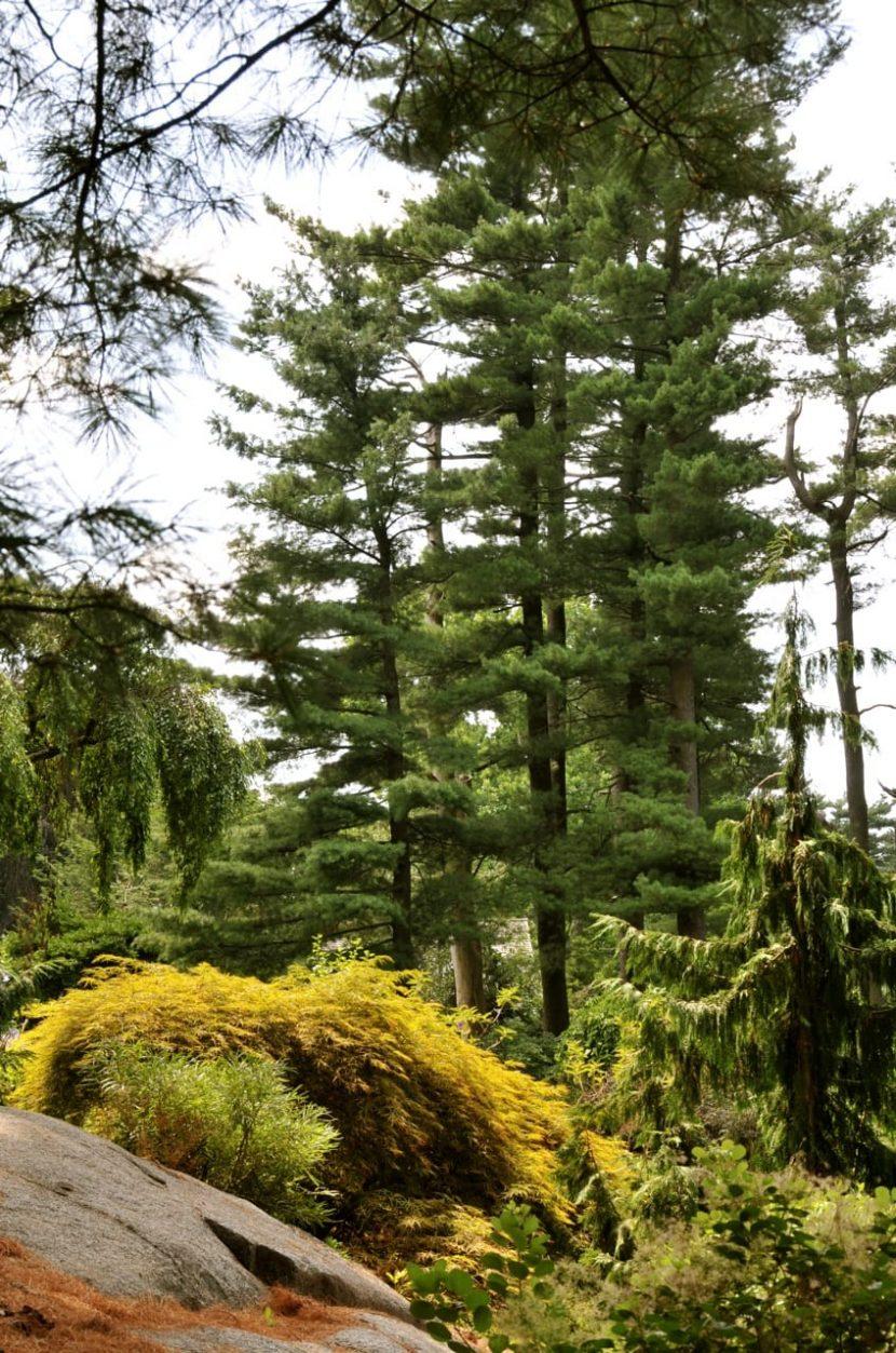 Web Pines