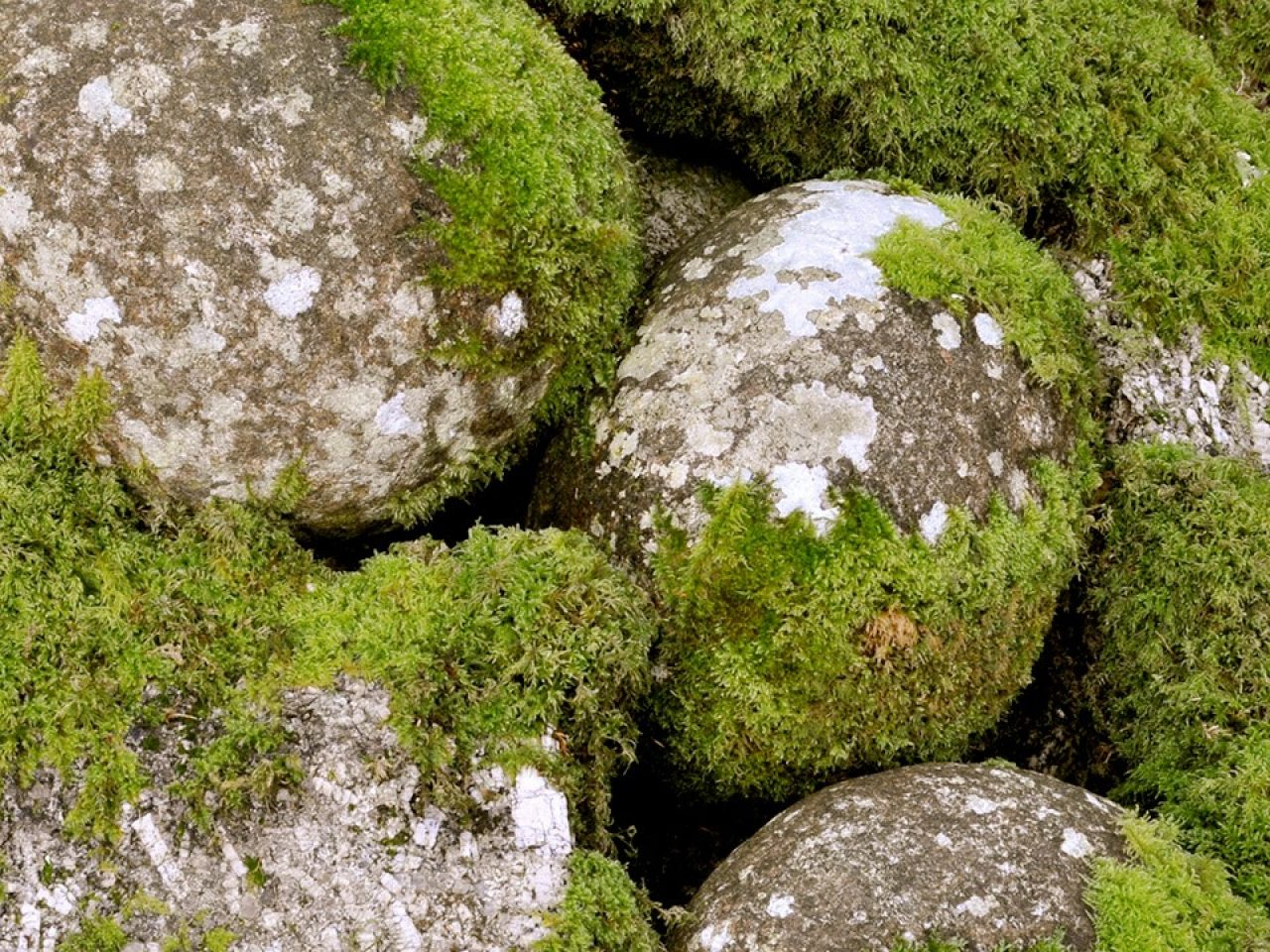 A chain of mossy stones as a garden feature.